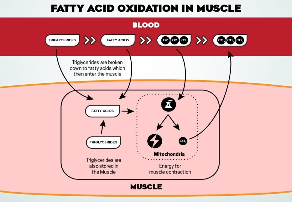 Burning Fatty Acids Pictures