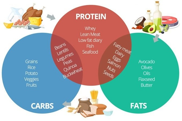 Carbohydrates Proteins Fat Pics