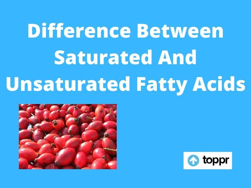 Definition Of Saturated Fatty Acid HD
