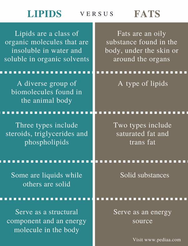 Difference Between Fat And Cholesterol Jpg