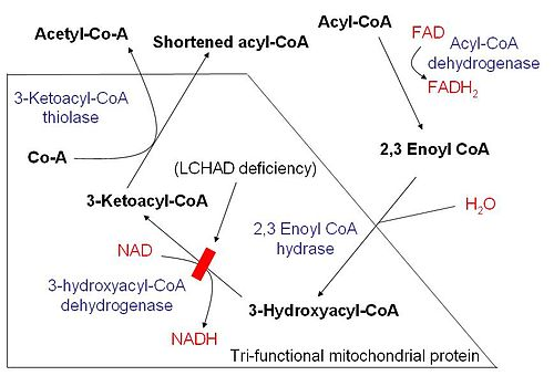 Disorders Of Fatty Acid Metabolism Pictures