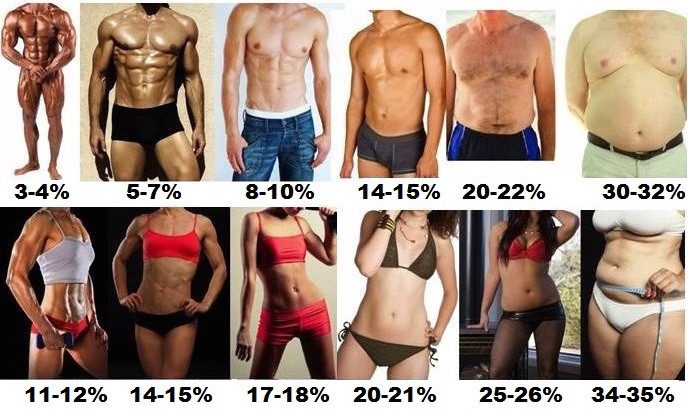 Whats My Body Fat Percentage Gif
