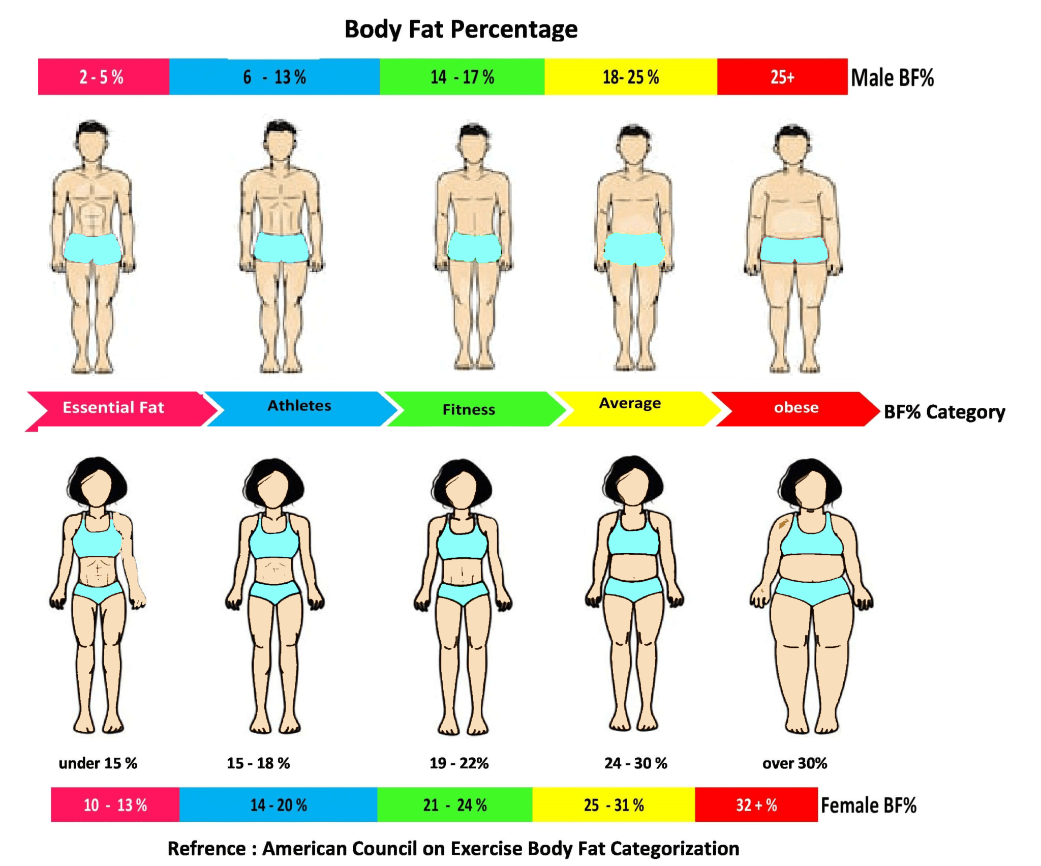 Whats My Body Fat Percentage Png